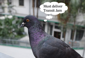 A grey pigeon with iridescent purple and green neck, in Hong Kong, with a thought bubble reminding them they need to deliver Transit Jam